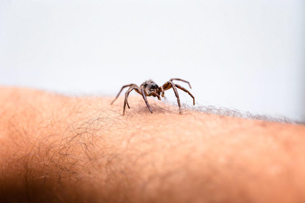 Spiders in Las Vegas