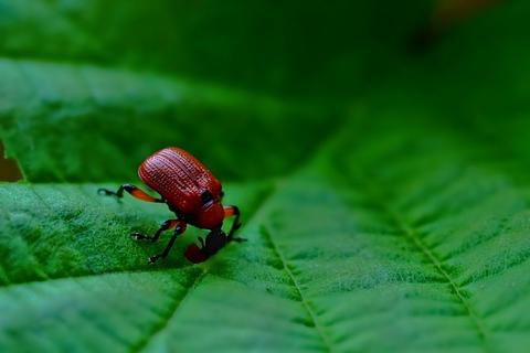 Beetle Removal and Pest Control in Las Vegas, NV
