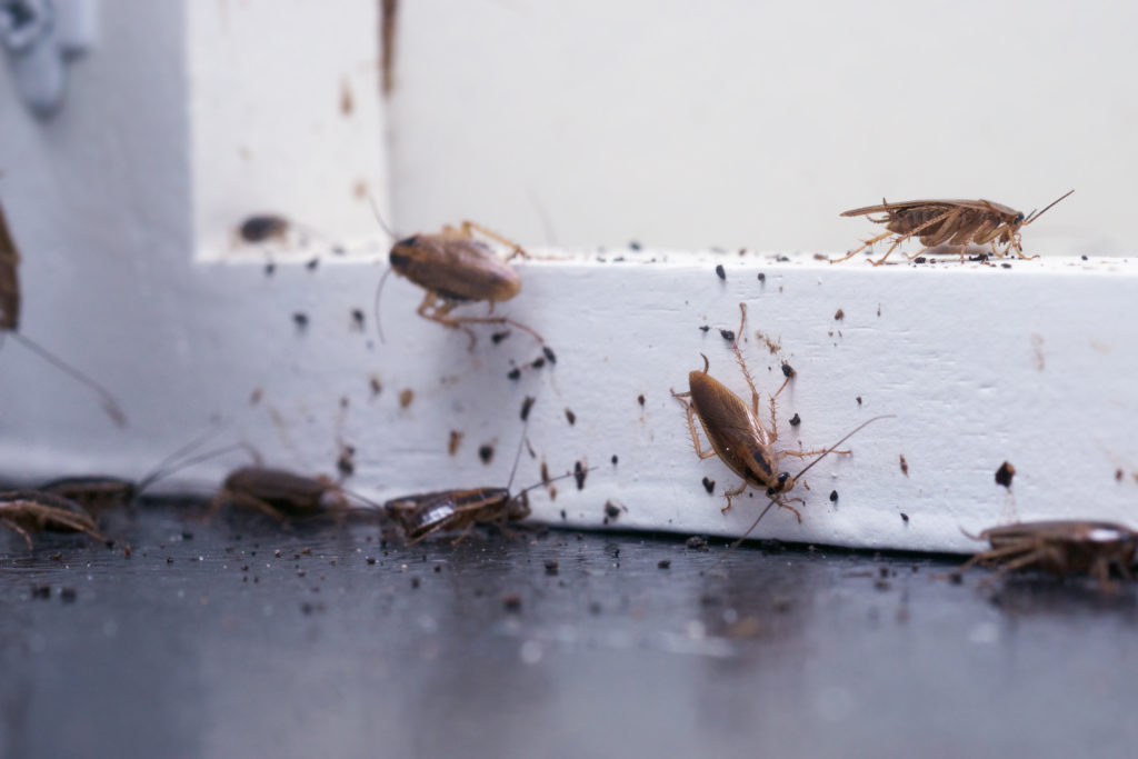 How to Get Rid of Cockroaches in Las Vegas