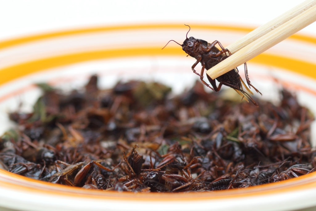 Information on Crickets