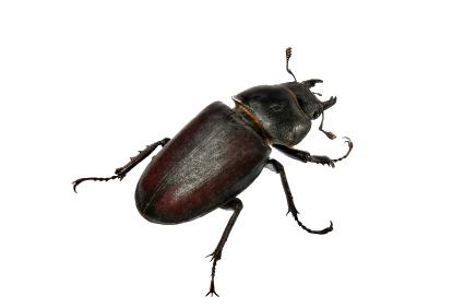 Pest Control for Beetles in Las Vegas
