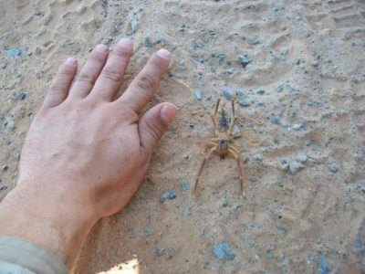 How to Get Rid of Sun Spiders in Las Vegas